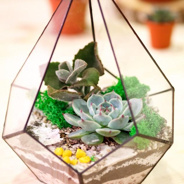 Флорариум капля