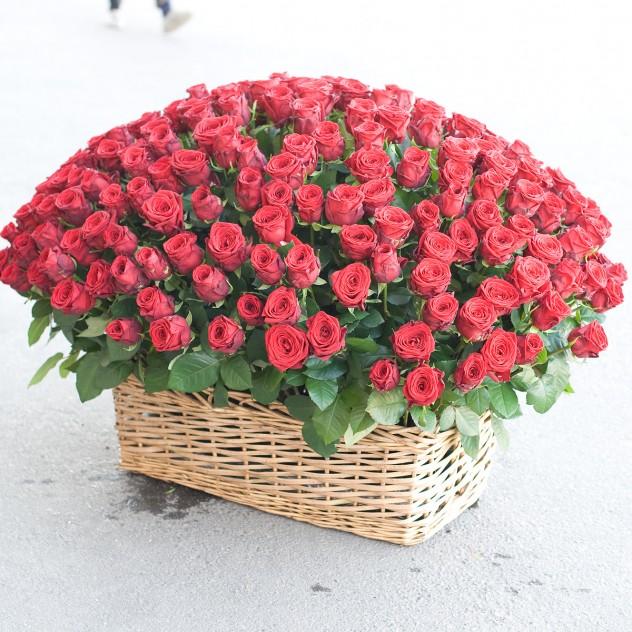 Корзина из красных роз (251 роза)