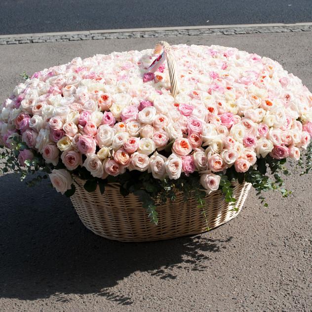"""Корзина из пионовидных роз """"Голивудская история"""" (501 роза)"""